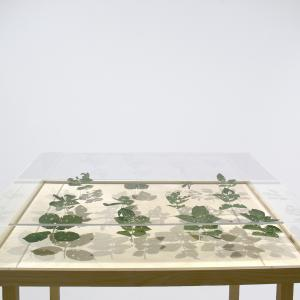 Peter Matyasi: Artist In Residence 2., leaves, plexiglass, wooden stand, 80×115×60cm, 2018, Herbarium exhibition